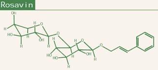 Rhodiola Rosea Phytochemistry - Rosavin